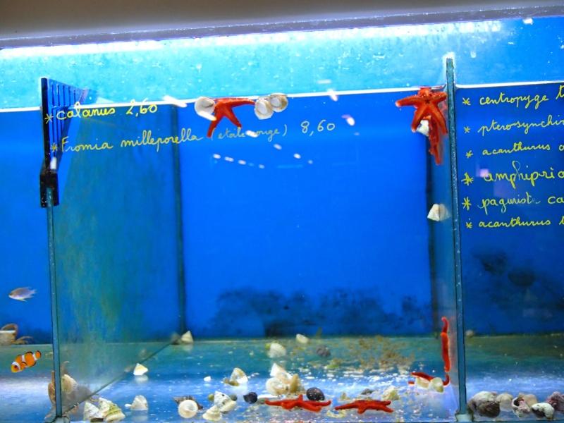 Sortie association au poisson d or P8220022