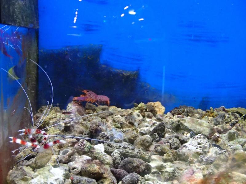 Sortie association au poisson d or P8220025