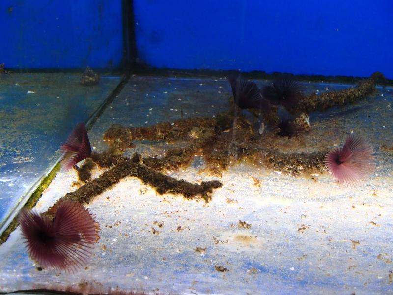 Sortie association au poisson d or P8220026