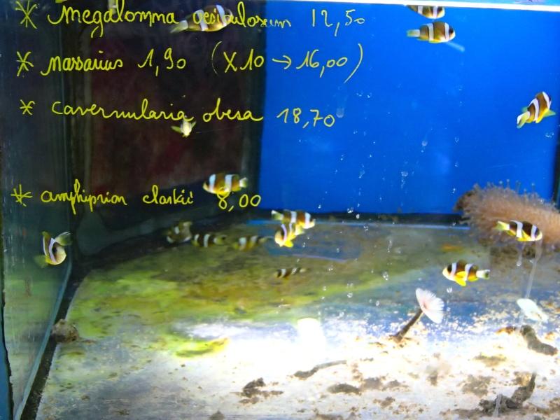 Sortie association au poisson d or P8220027