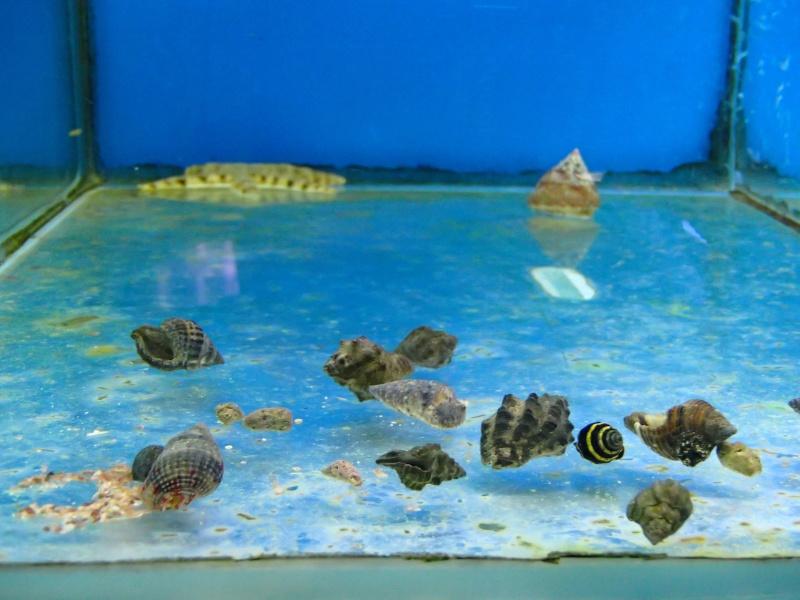 Sortie association au poisson d or P8220028