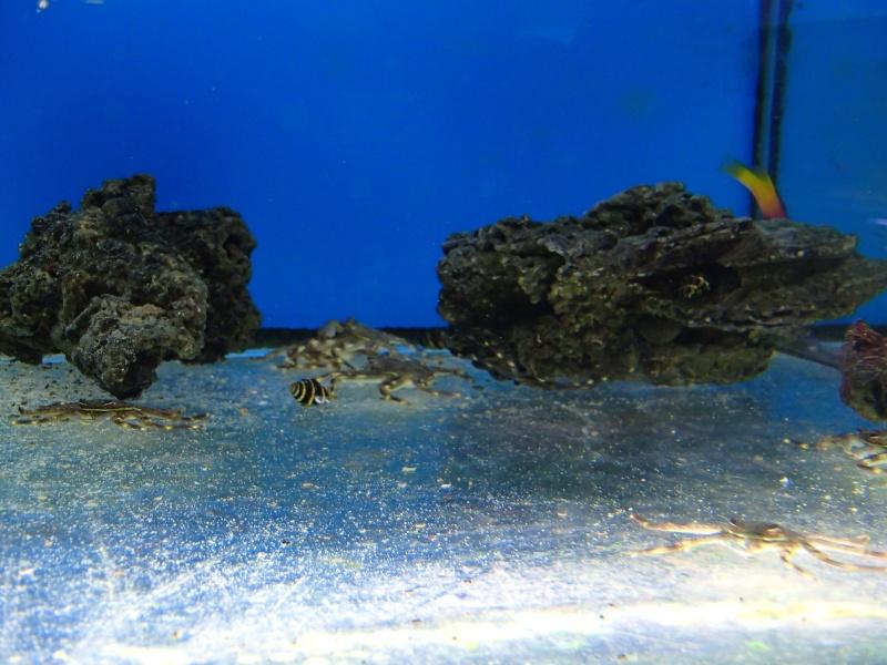 Sortie association au poisson d or P8220029
