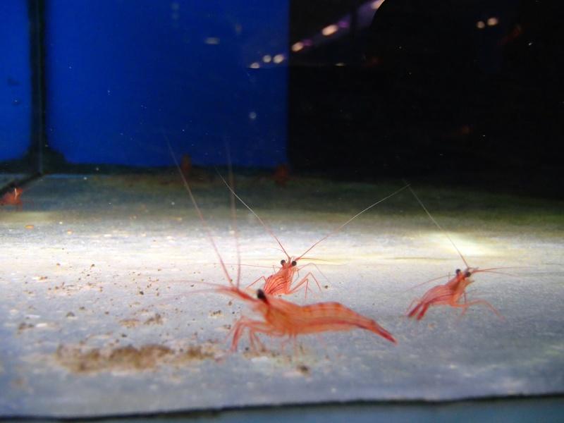 Sortie association au poisson d or P8220030