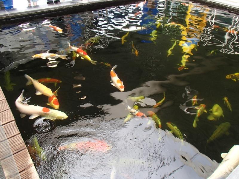 Sortie association au poisson d or P8220042
