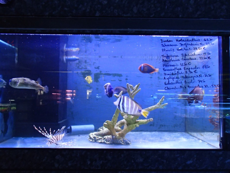 Sortie association au poisson d or P8220049