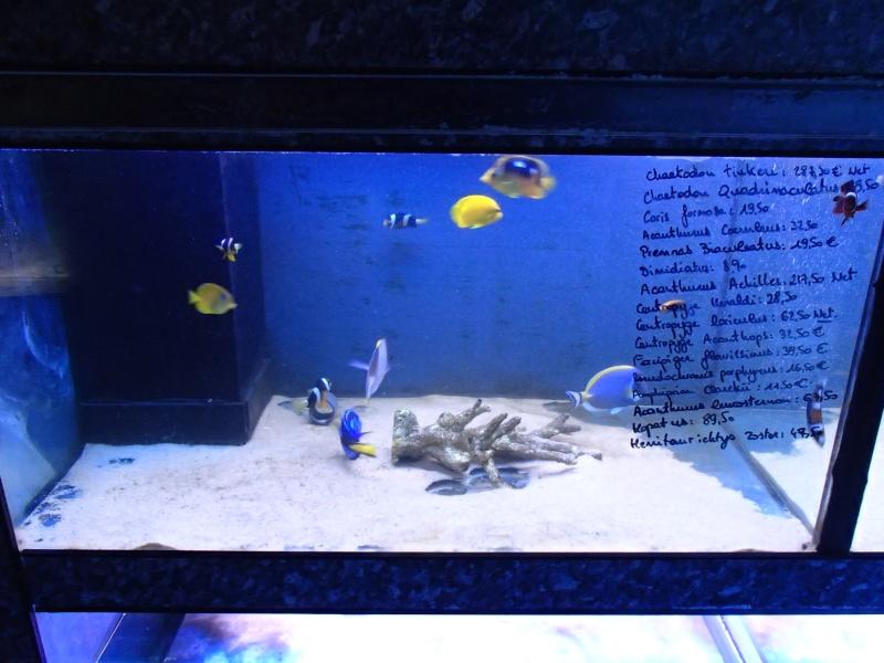 Sortie association au poisson d or P8220050