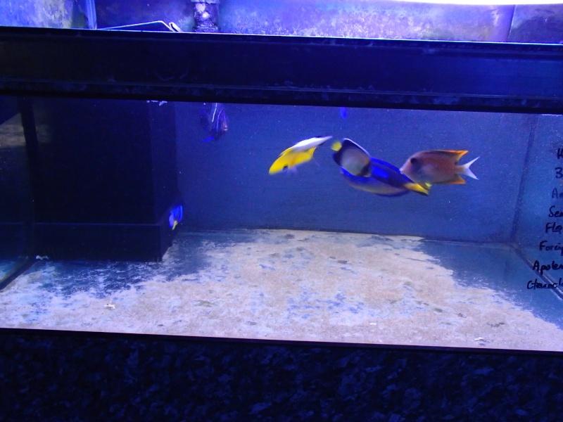 Sortie association au poisson d or P8220051