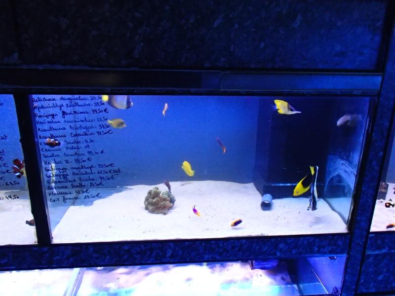 Sortie association au poisson d or P8220053