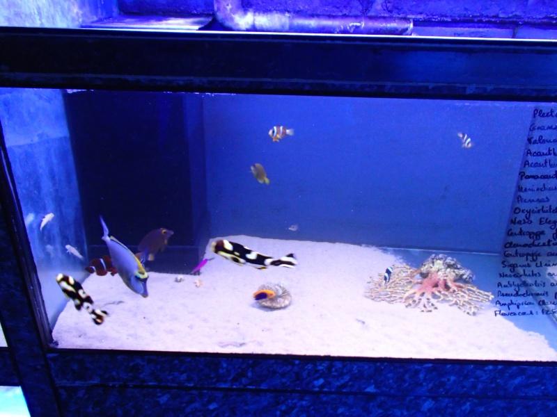 Sortie association au poisson d or P8220054