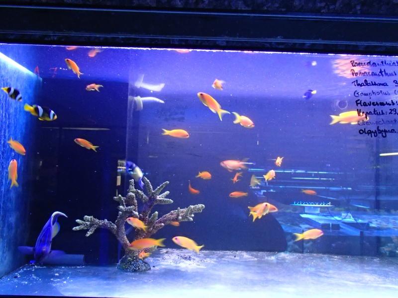 Sortie association au poisson d or P8220055