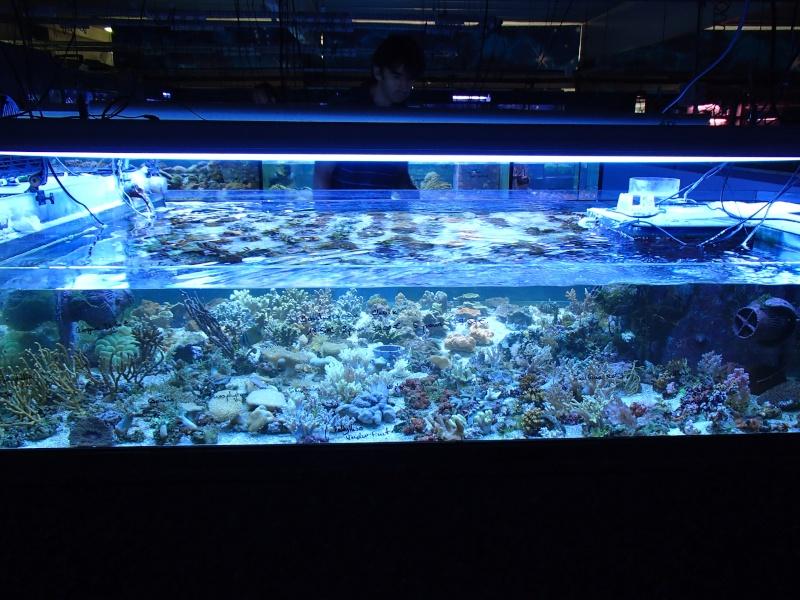 Sortie association au poisson d or P8220056