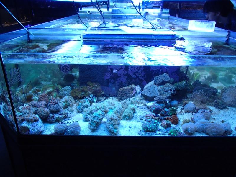 Sortie association au poisson d or P8220057