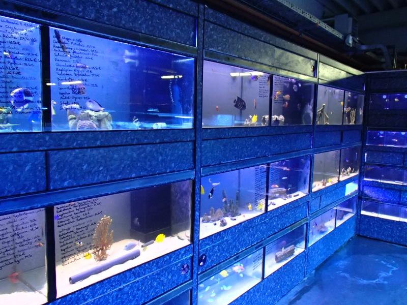Sortie association au poisson d or P8220058