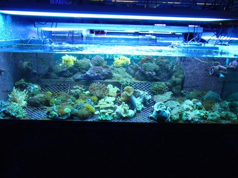 Sortie association au poisson d or P8220059