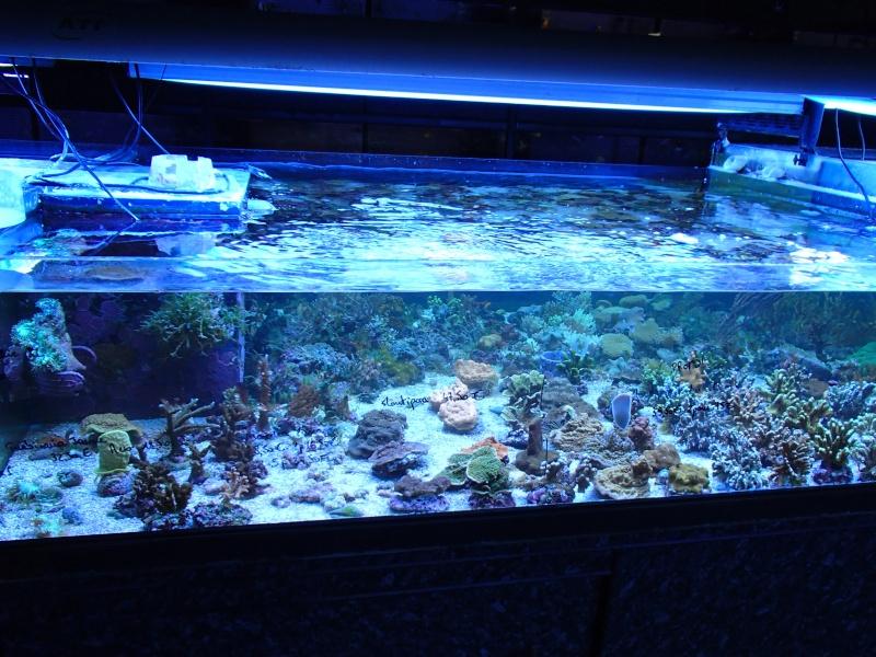 Sortie association au poisson d or P8220060