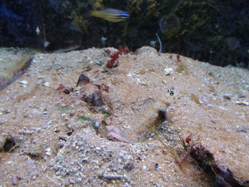 Sortie association au poisson d or P8220064