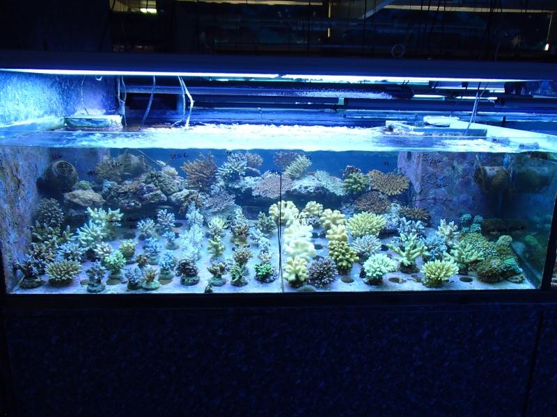 Sortie association au poisson d or P8220065