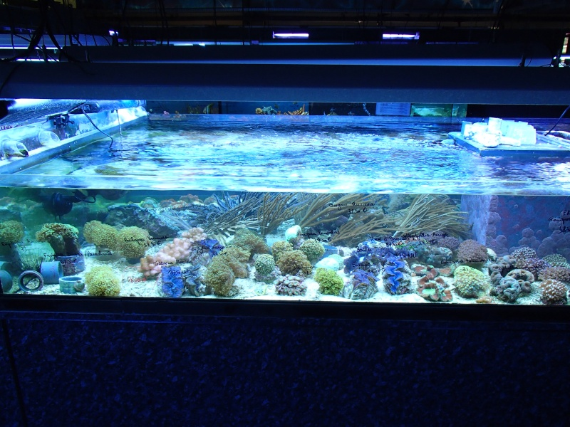 Sortie association au poisson d or P8220067