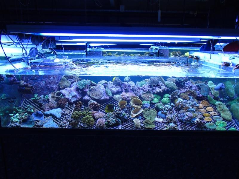 Sortie association au poisson d or P8220070