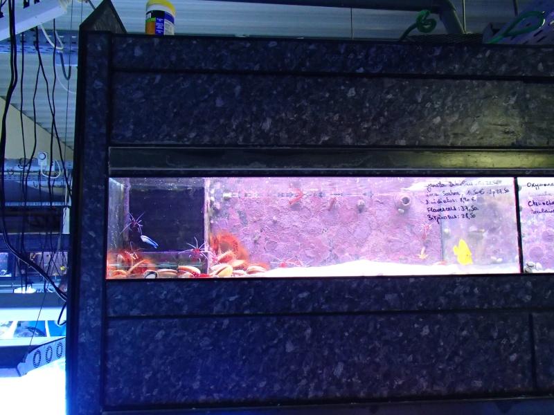 Sortie association au poisson d or P8220072