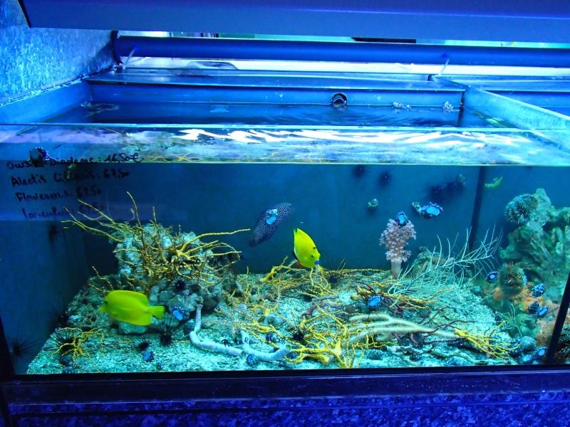 Sortie association au poisson d or P8220076
