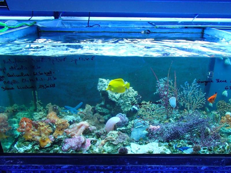 Sortie association au poisson d or P8220078