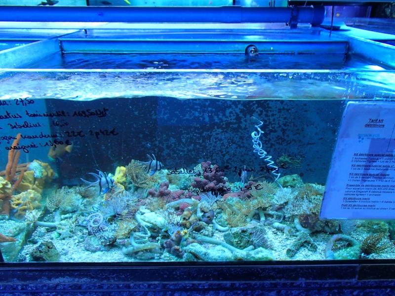 Sortie association au poisson d or P8220081