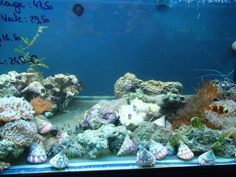 Sortie association au poisson d or P8220084