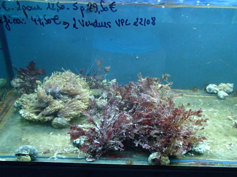 Sortie association au poisson d or P8220085