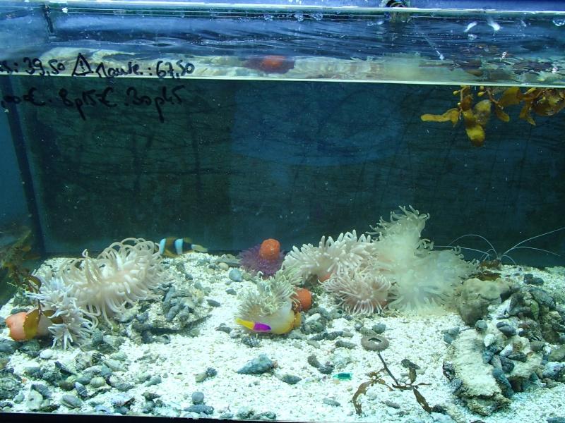 Sortie association au poisson d or P8220086