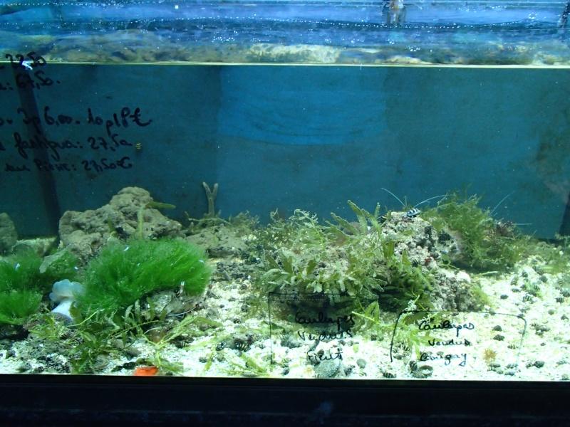 Sortie association au poisson d or P8220087