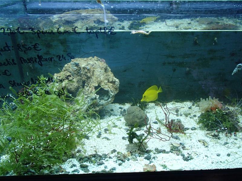 Sortie association au poisson d or P8220088