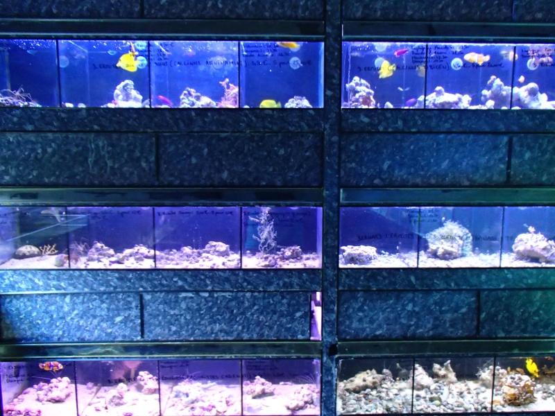 Sortie association au poisson d or P8220090