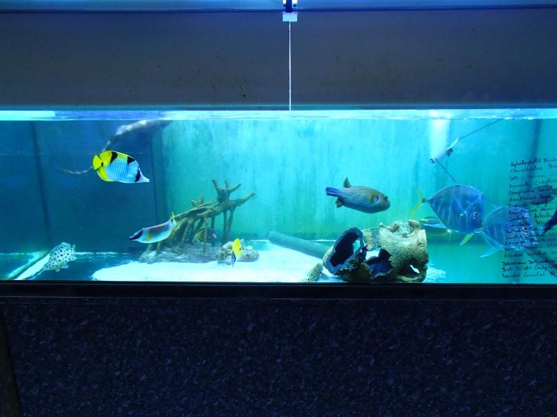 Sortie association au poisson d or P8220092