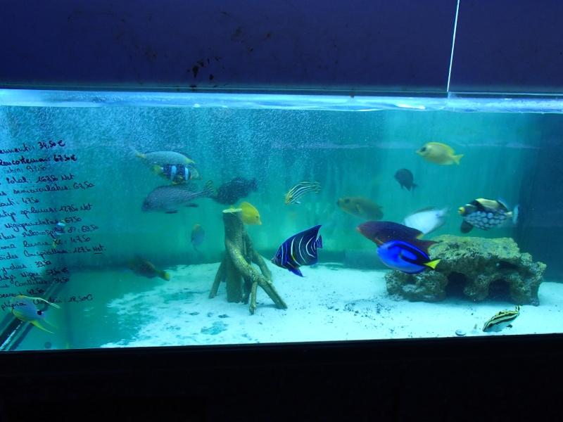 Sortie association au poisson d or P8220095