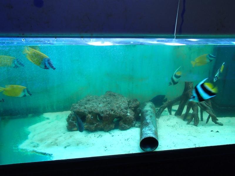 Sortie association au poisson d or P8220096