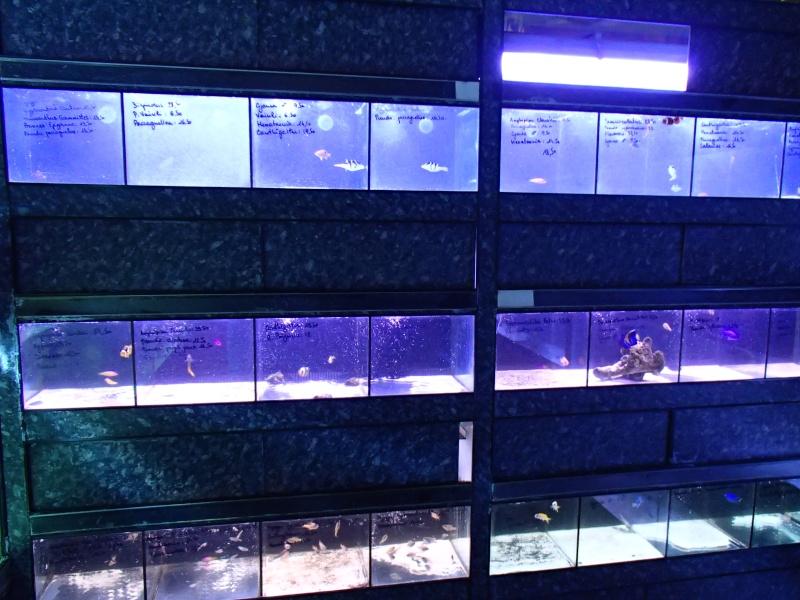 Sortie association au poisson d or P8220098