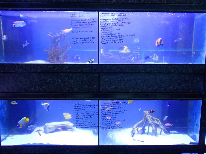 Sortie association au poisson d or P8220099