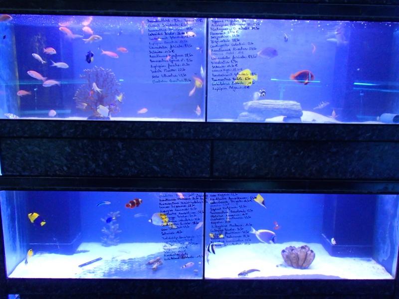 Sortie association au poisson d or P8220100