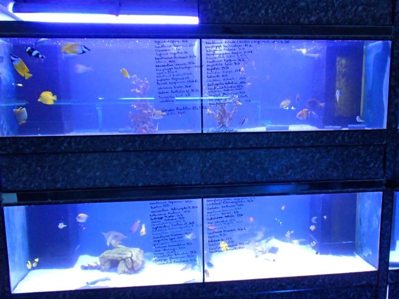 Sortie association au poisson d or P8220110