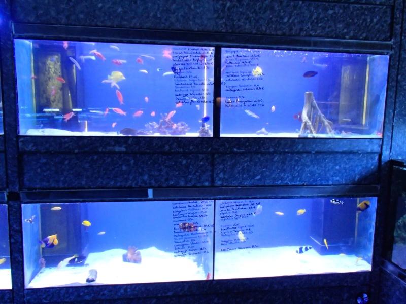 Sortie association au poisson d or P8220111