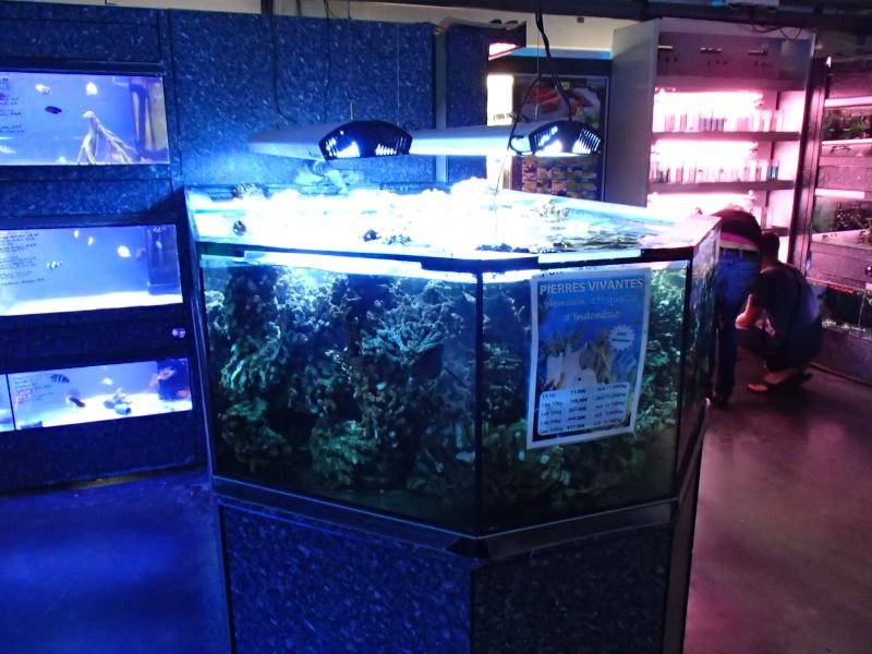 Sortie association au poisson d or P8220112