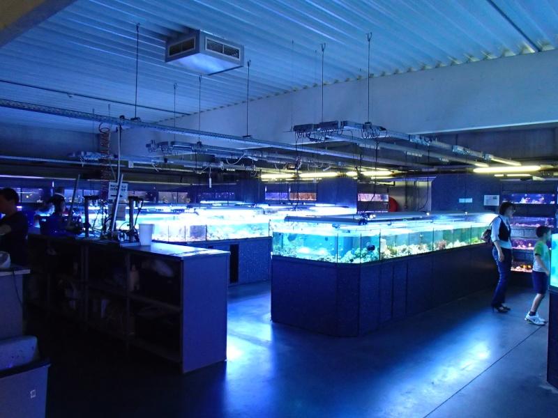 Sortie association au poisson d or P8220113