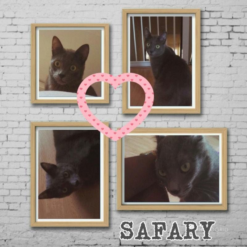 FIREFOX, OPERA et SAFARY - Page 3 Safary10
