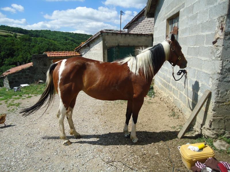 Vends jument paint-horse Dsc02110