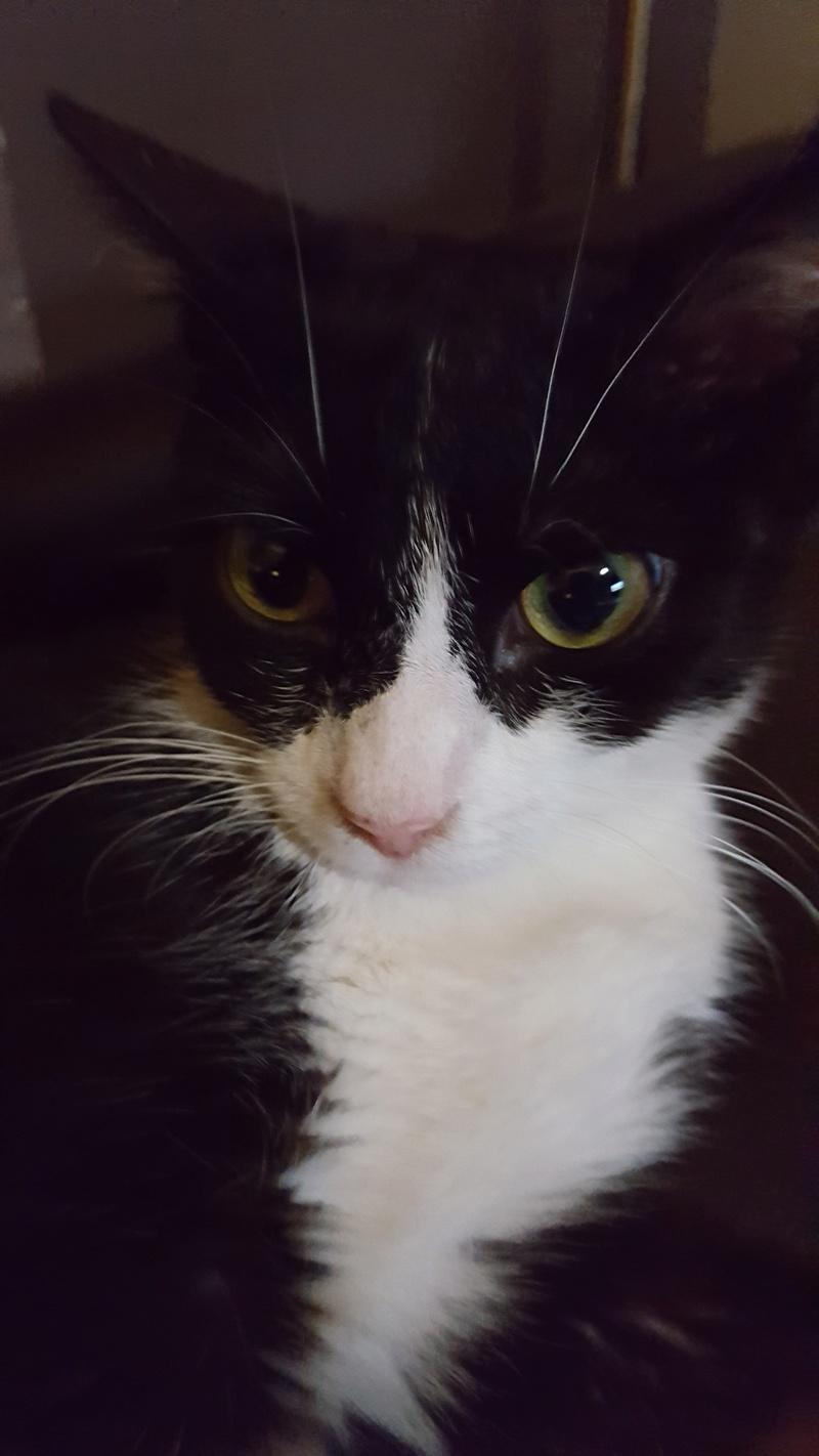71) Krabi, née en février 2016 20160817