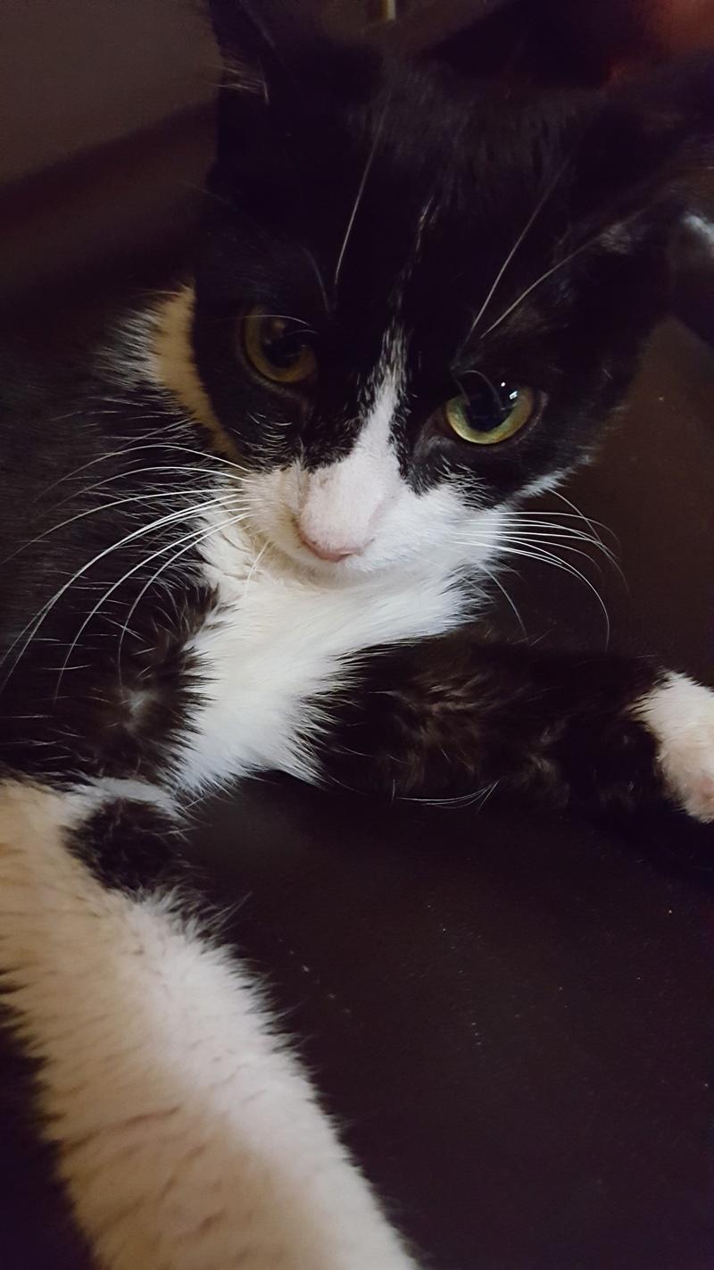 71) Krabi, née en février 2016 20160819