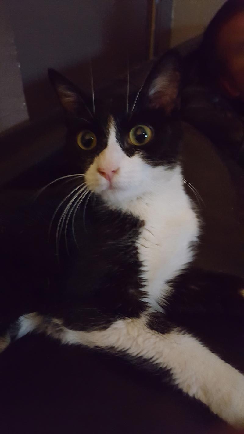 71) Krabi, née en février 2016 20160822