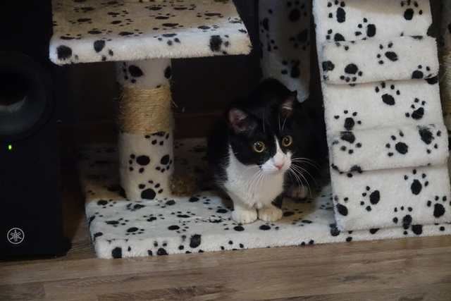 71) Krabi, née en février 2016 Dsc00914