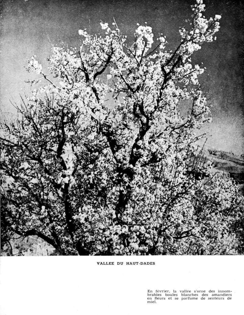 Au Sud de l'Atlas vers le Pays des Casbahs - Page 3 Sud_ca47